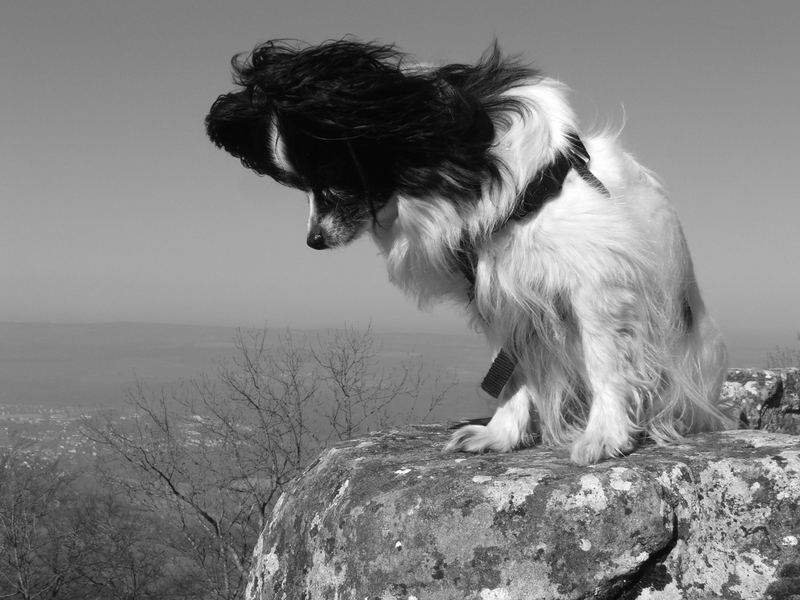Kleiner Hund, große Welt... oder anders rum?