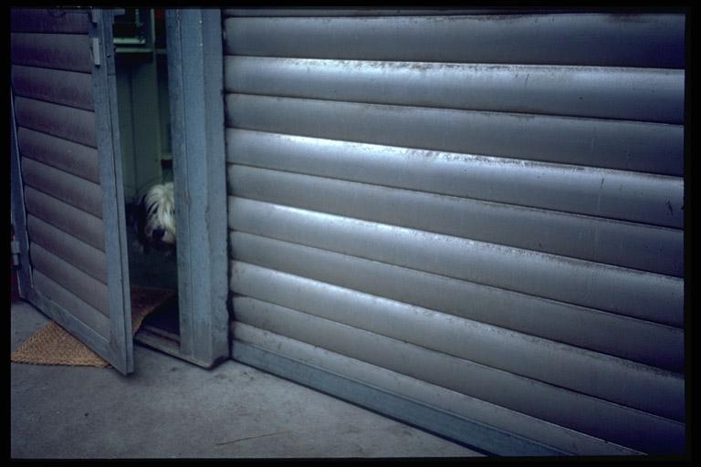 Kleiner Hund versteckt