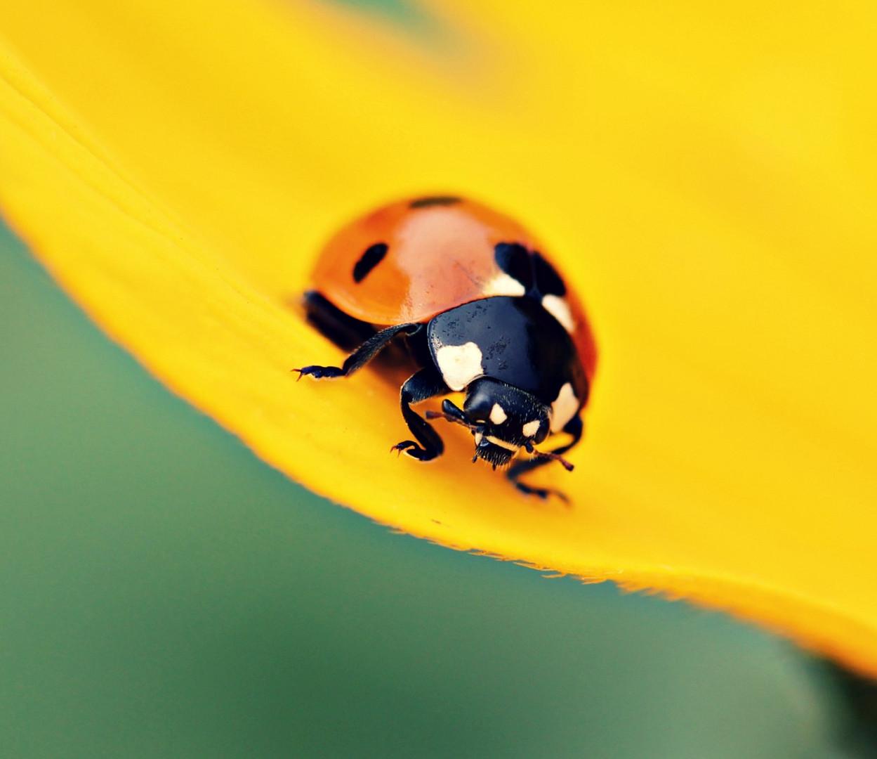 kleiner käfer,,,,