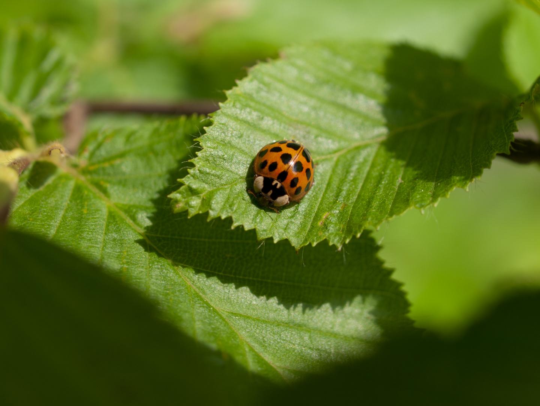 kleiner Käfer