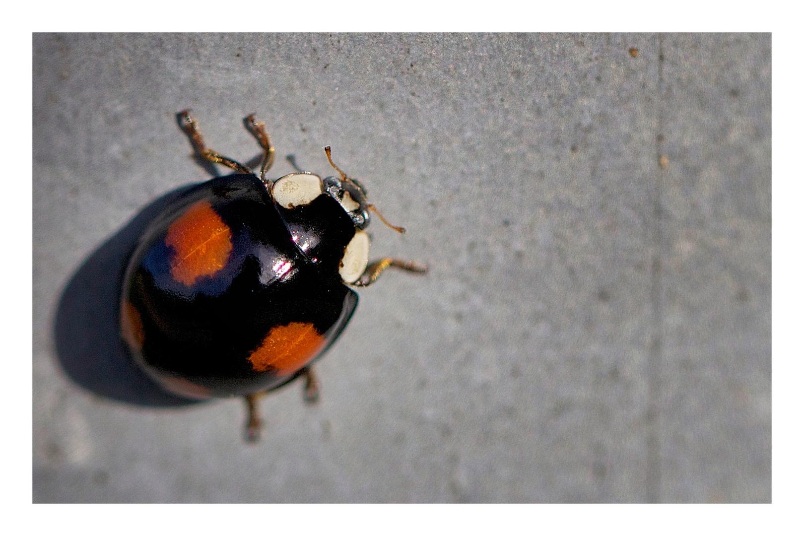 kleiner Käfer..
