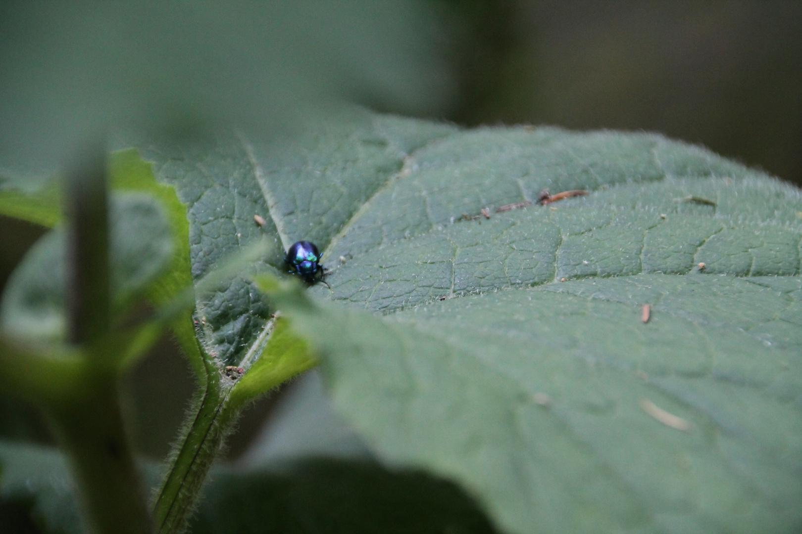 kleiner Käfer^^