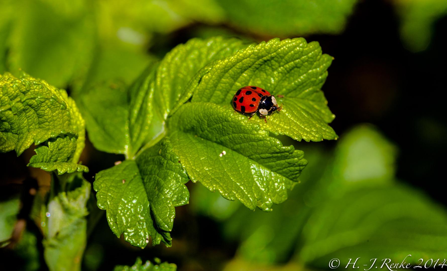 Kleiner Käfer ganz groß