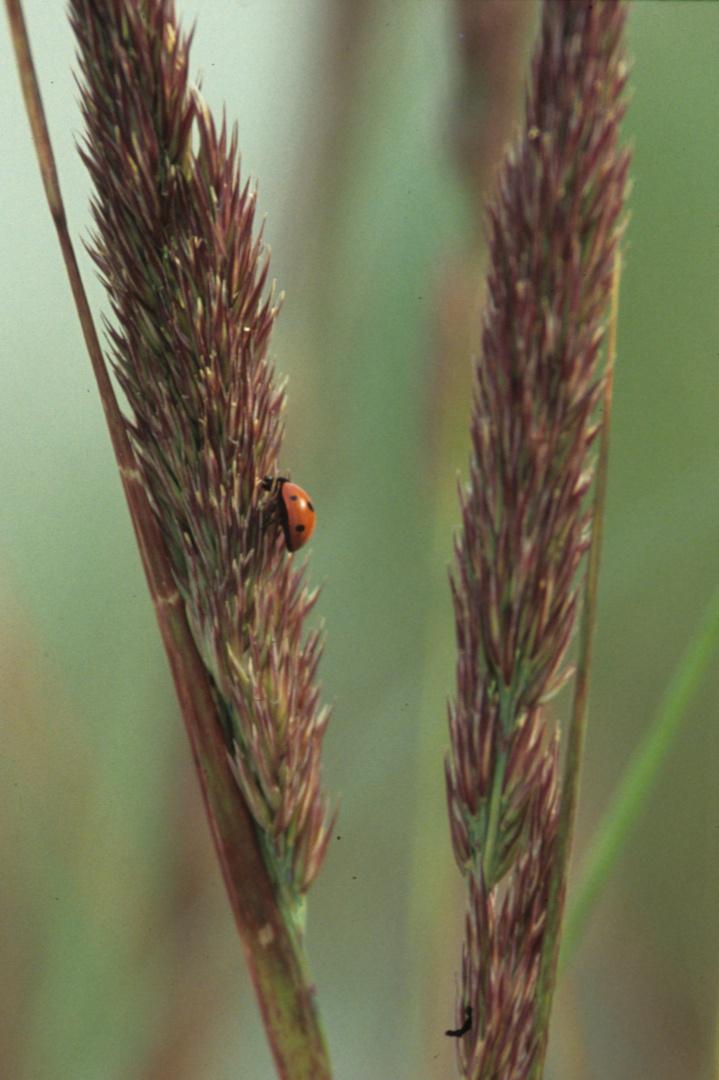 Kleiner Käfer unterwegs