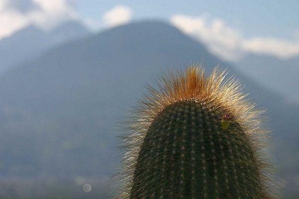 Kleiner Kaktus-großer Berg