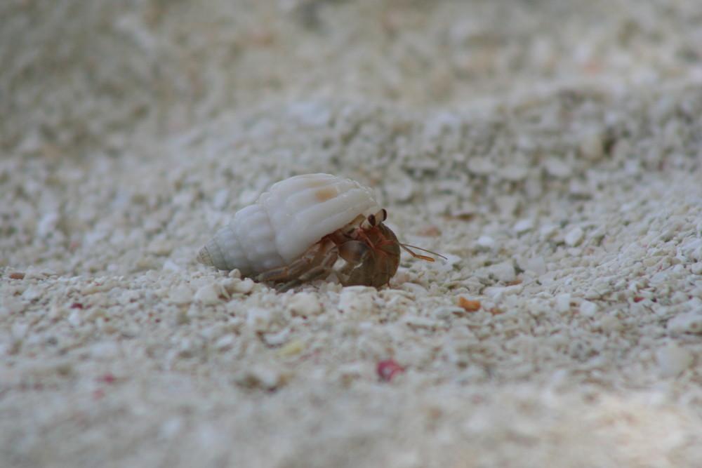 kleiner Krabbler