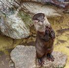 kleiner Otter :))