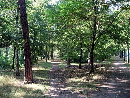 kleiner Park