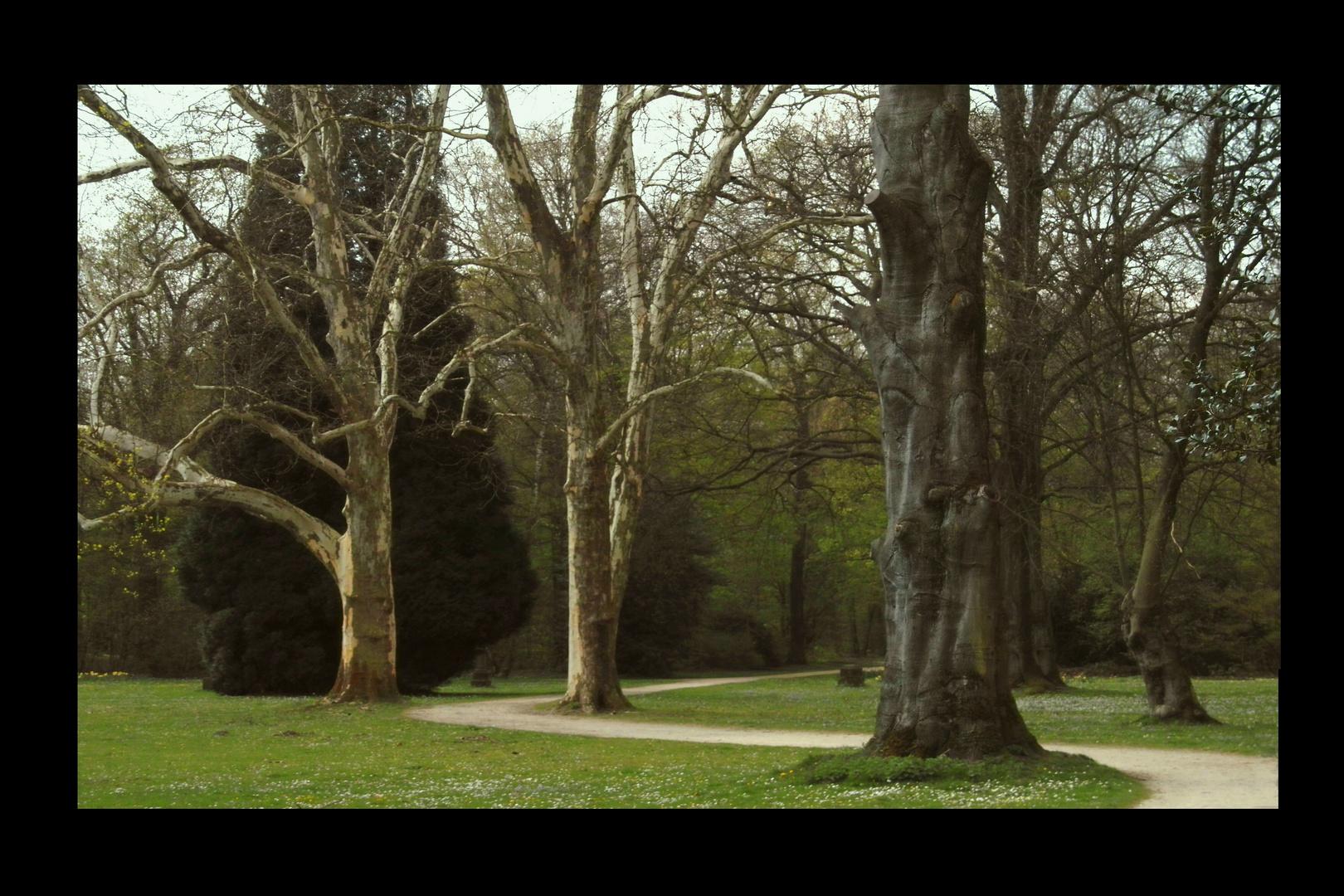 Kleiner  Park mit altem  Baumbestand.