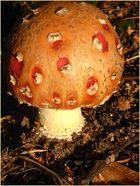 Kleiner Pilz - ganz groß