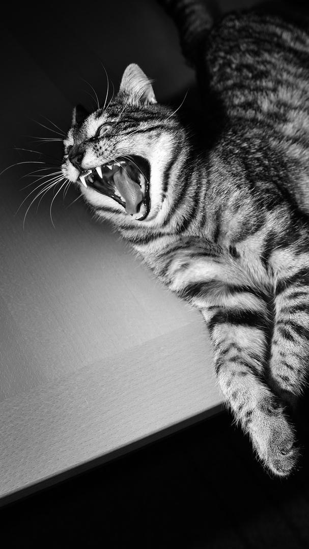 Kleiner Rocky hat Hunger :)
