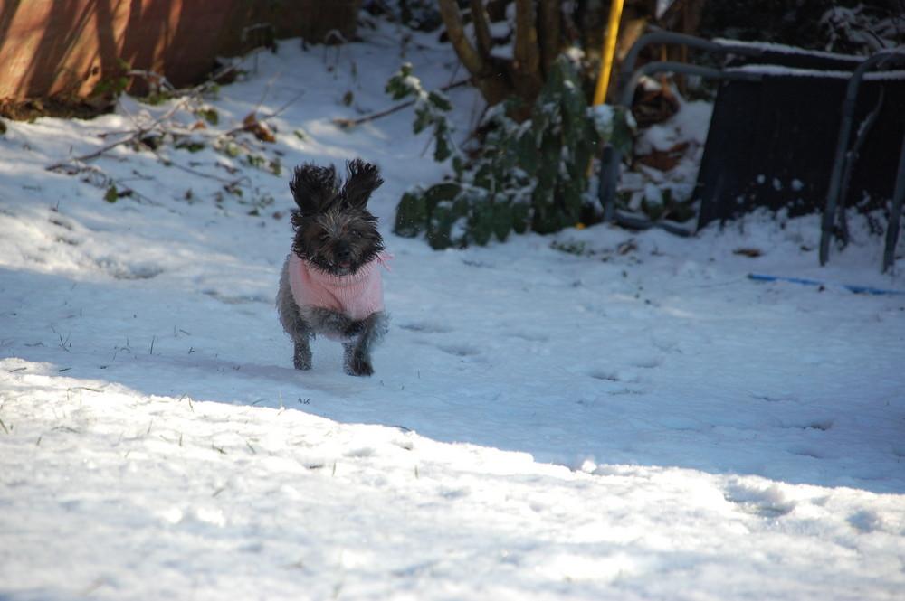 Kleiner Schneehase in rosa....;-)
