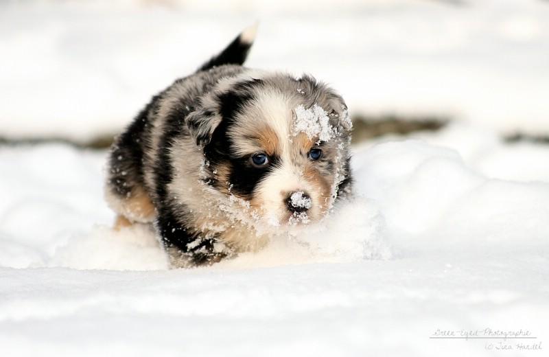 Kleiner Schneeschieber?