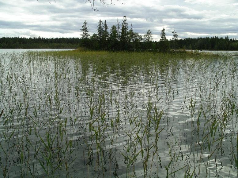 Kleiner See bei Östersund