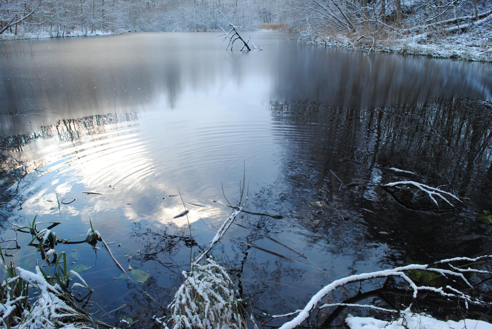 Kleiner See im Wald