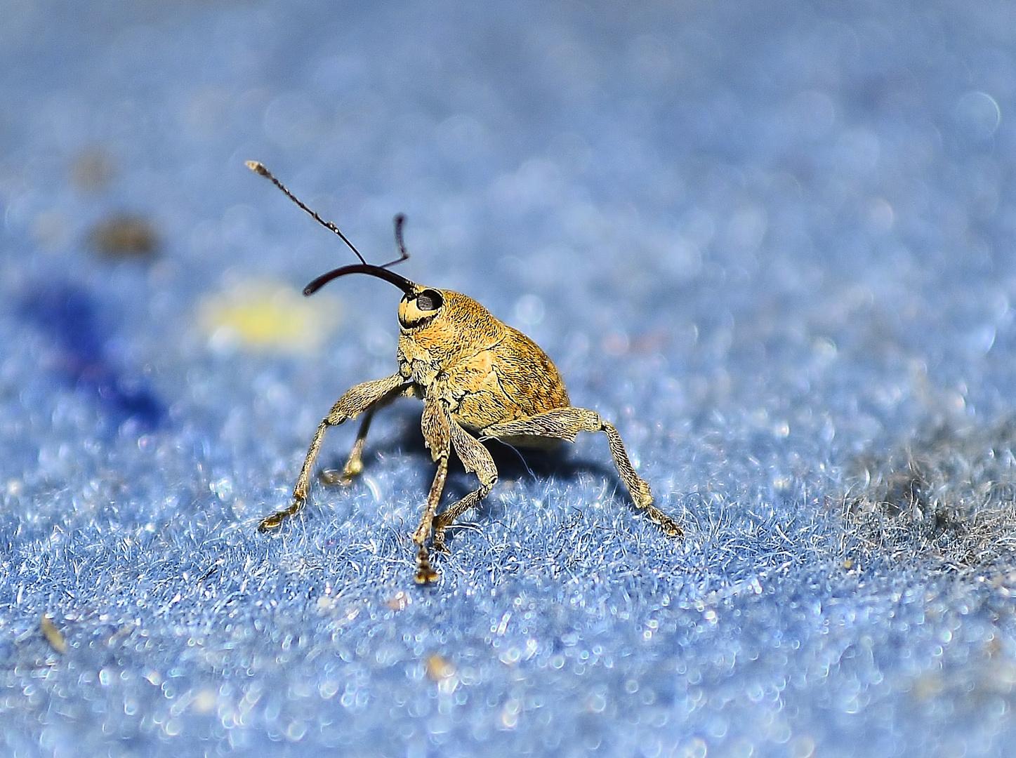 Kleiner seltsamer Käfer