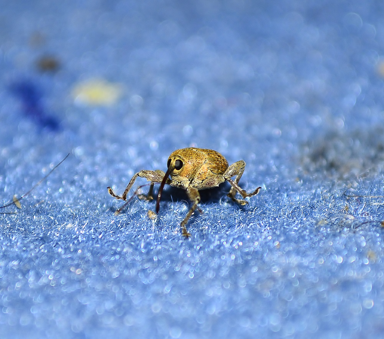 Kleiner seltsamer Käfer maschiert über den Teppich 2