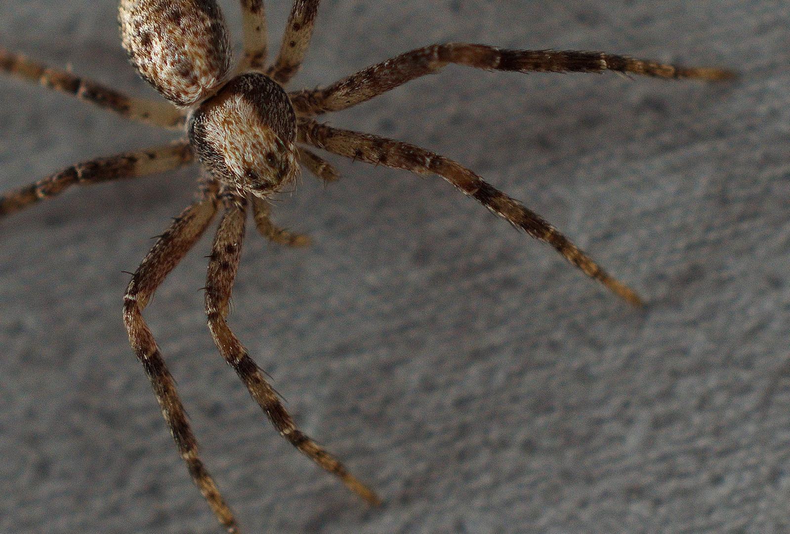 Kleiner Spider I