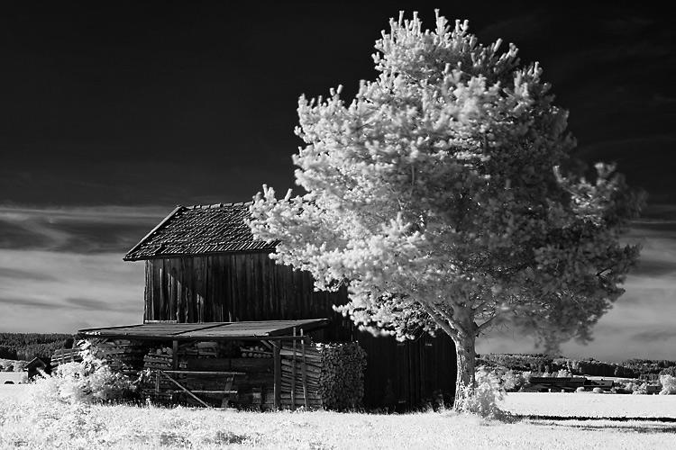 Kleiner Stadel mit Baum