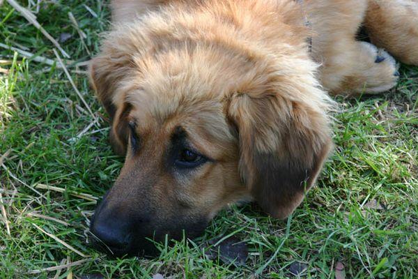Kleiner süßer Mischlingshund