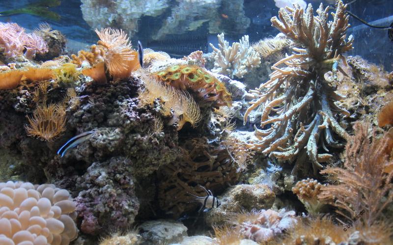Kleiner Teil der Unterwasserwelt