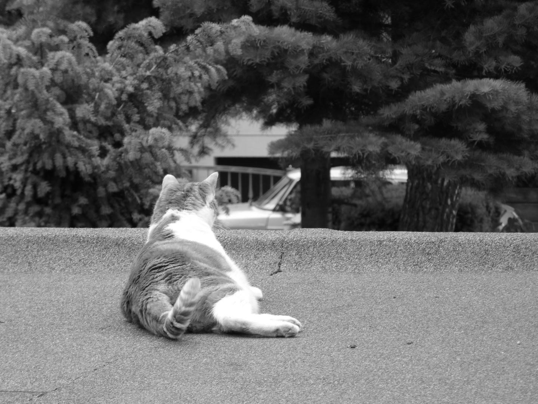 kleiner Tiger auf dem Garagendach