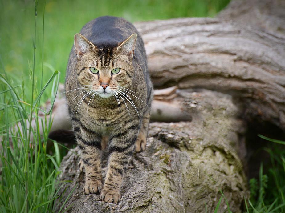 kleiner Tiger im Südpark....