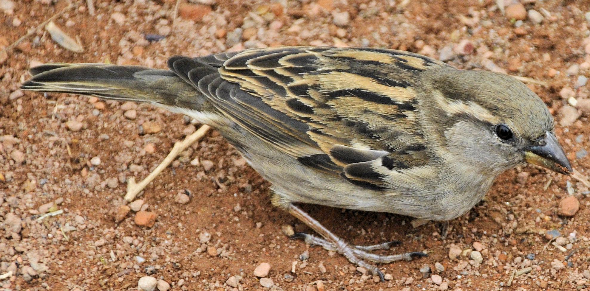 Kleiner Vogel 2