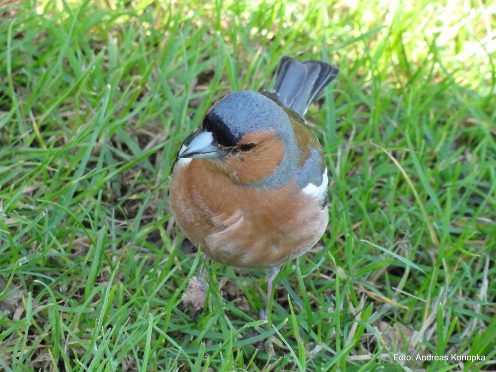 Kleiner Vogel.