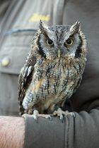Kleiner Vogel grossen Augen