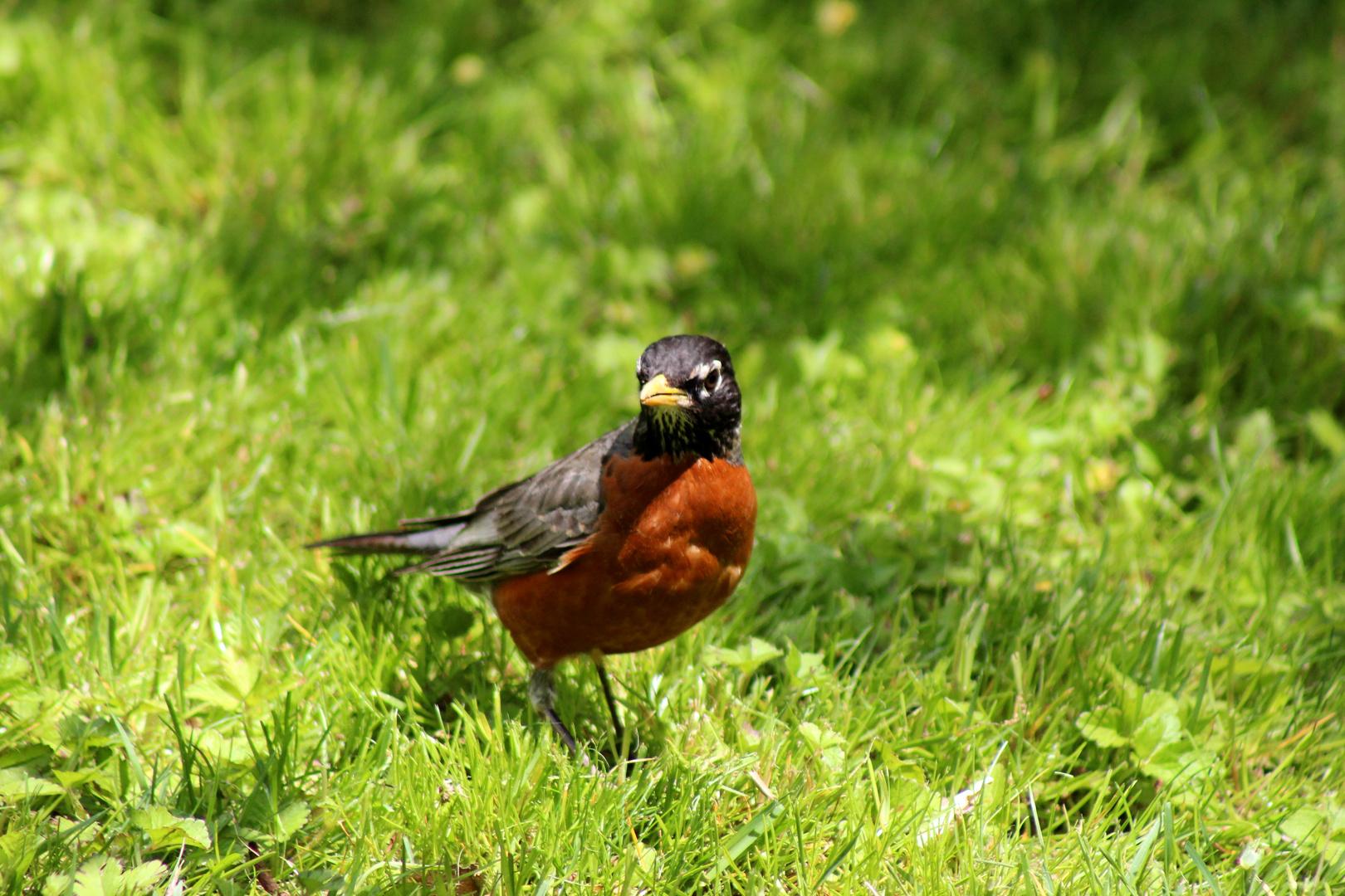 Kleiner Vogel im Central Park
