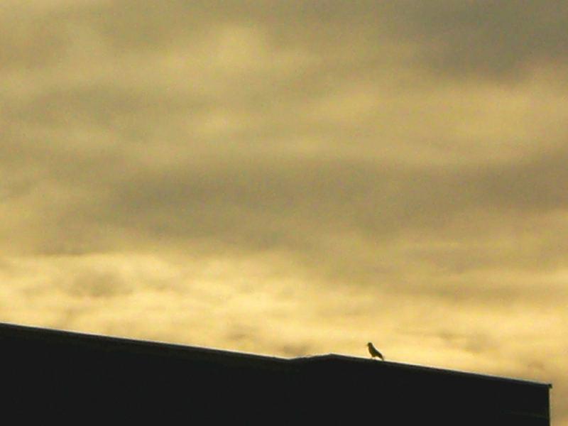 kleiner Vogel in der großen Welt...