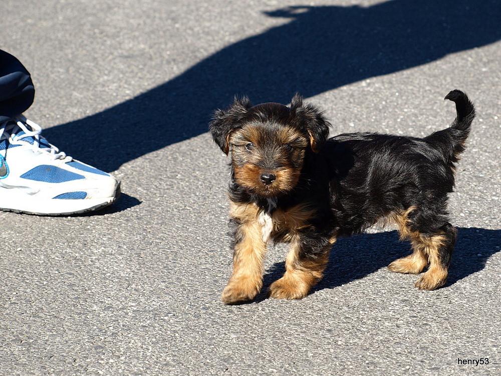 Kleiner Wachhund
