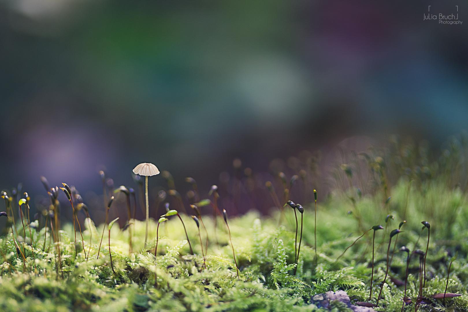 kleiner Wald