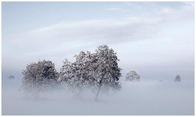 Kleiner Wald im Nebel