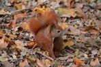 Kleiner Waldkobold !!!