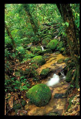 Kleiner Wasserfall <in Regenwald>