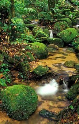 Kleiner Wasserfall <in Regenwald> (Version02)