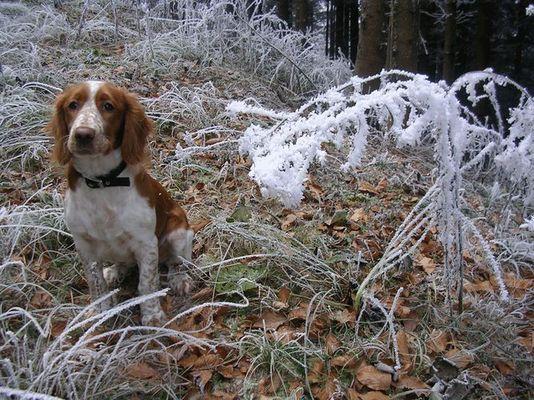 kleiner wauwau im frost
