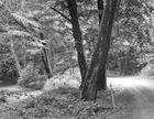 Kleiner Weg im Wald mit Bäumen.