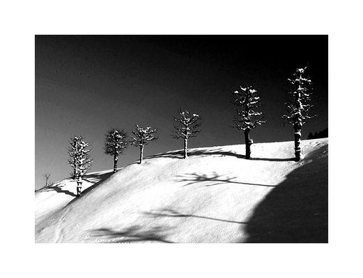 ... kleiner winterwald ...