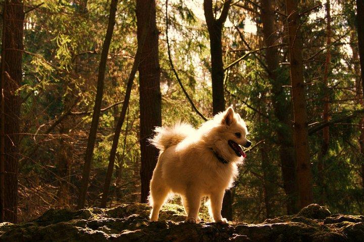 kleiner wolf.....