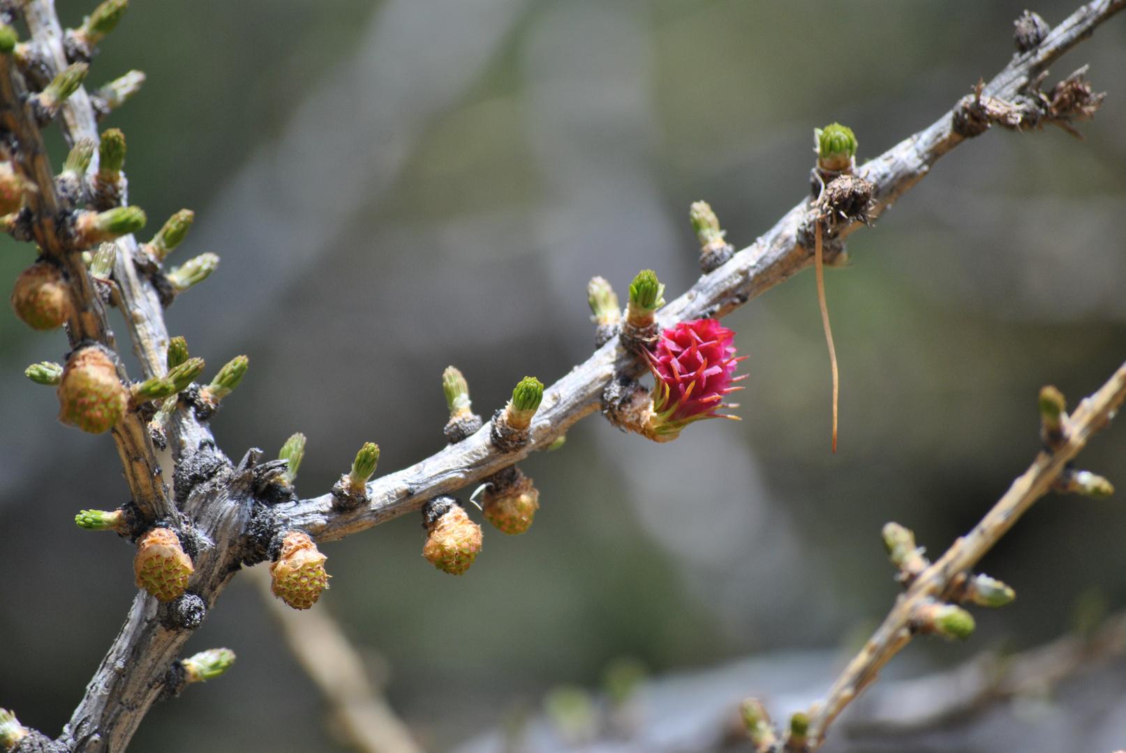 Kleiner Zweig