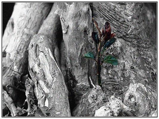 ` kleiner Zweig ganz Gross´