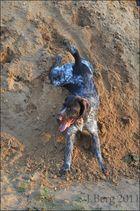 Kleiner,lustiger Hund :)