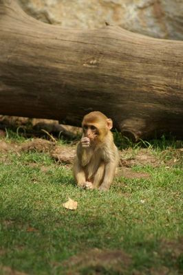 Kleines Äffchen im Leipziger Zoo