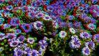 kleines Blumenmeer in 3D