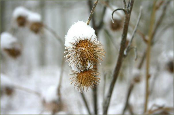Kleines Feuerwerk im Schnee. . . . . . . . . .