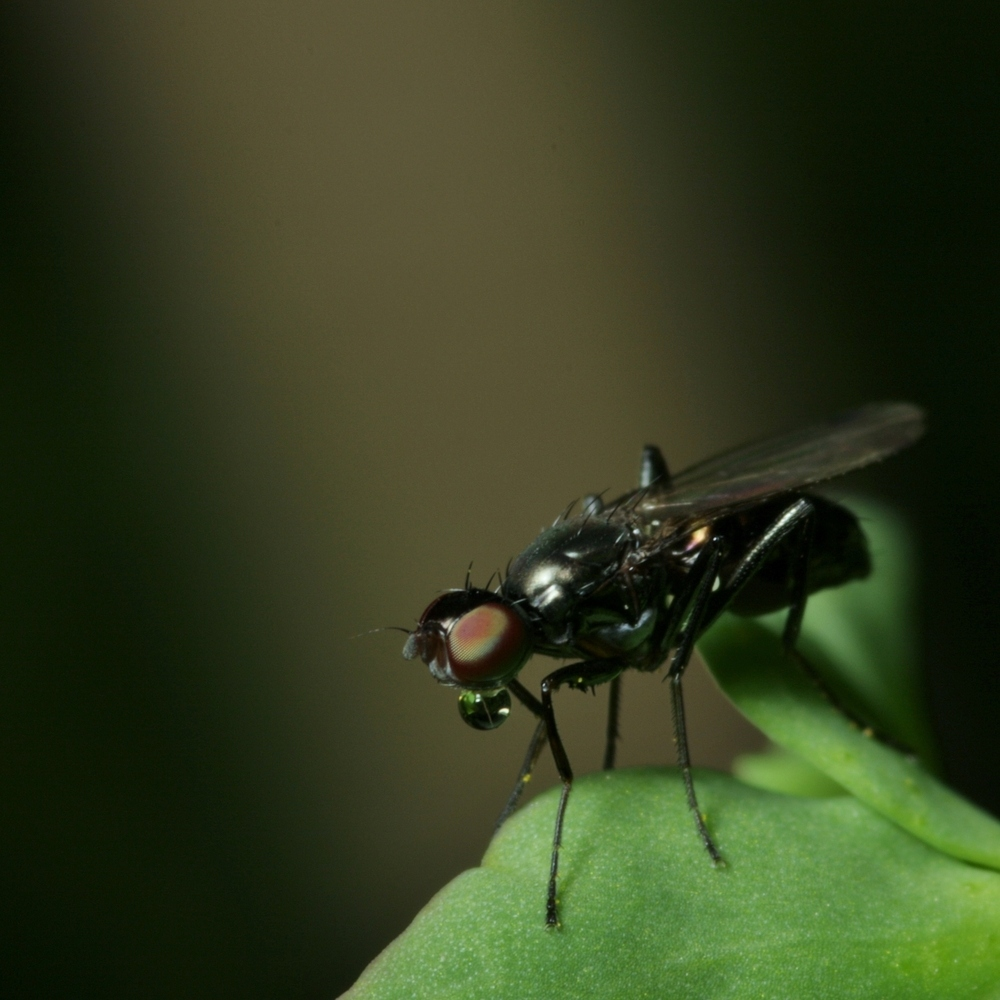 Kleines Fliegenportrait