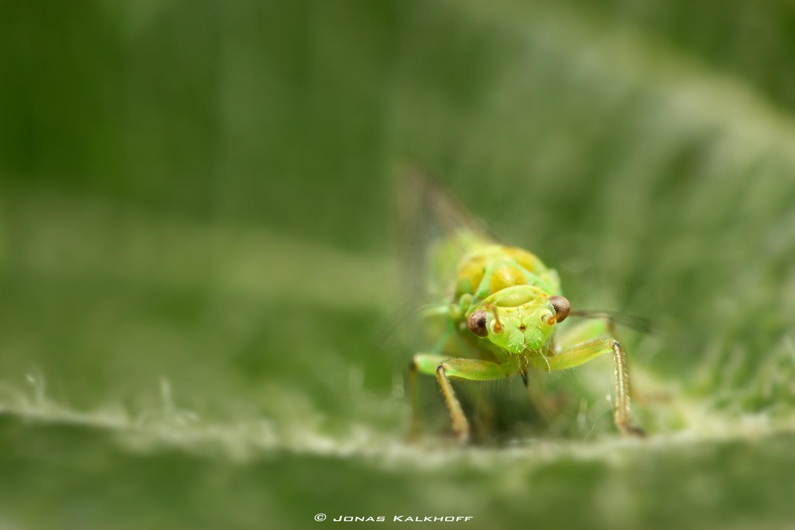 kleines grünes dings